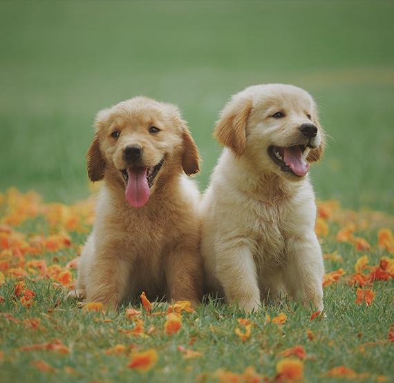Zwei liebe Hunde Training und Kosten